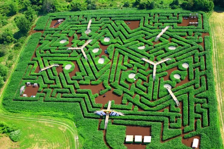 Ashcombe Maze - 30 Amazing Mazes Worldwide | Complex on spiral labyrinth garden, labyrinth herb garden, labyrinth garden kit, lavender labyrinth garden, labyrinth flower garden, labyrinth meditation garden, labyrinth garden designs, spiritual labyrinth garden,